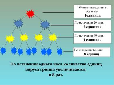 По истечении одного часа количество единиц вируса гриппа увеличивается в 8 раз.