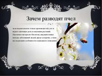 Зачем разводят пчел Пчела медоносная не только производит мёд, но и играет кл...