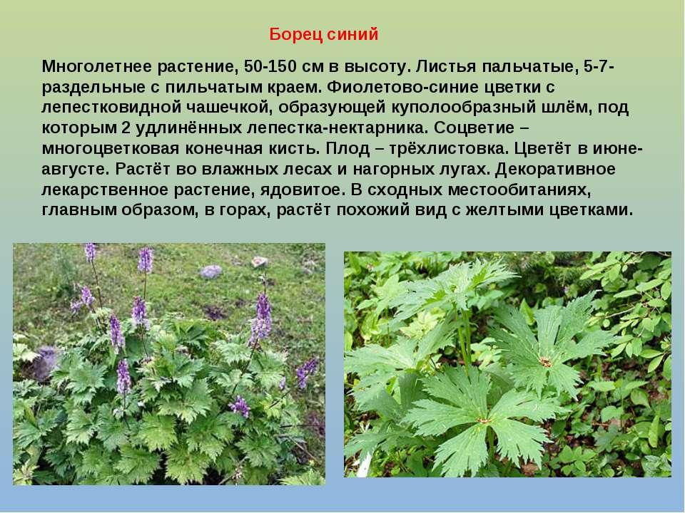 Многолетнее растение, 50-150 см в высоту. Листья пальчатые, 5-7-раздельные с ...