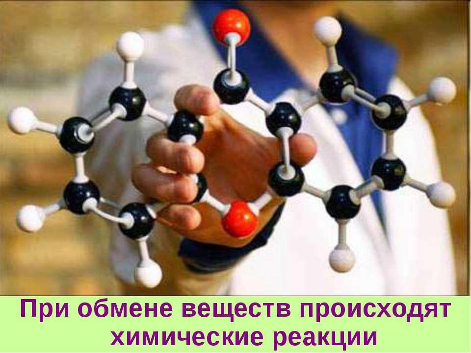 При обмене веществ происходят химические реакции