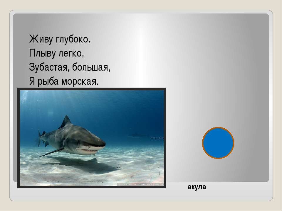 Живу глубоко. Плыву легко, Зубастая, большая, Я рыба морская. акула