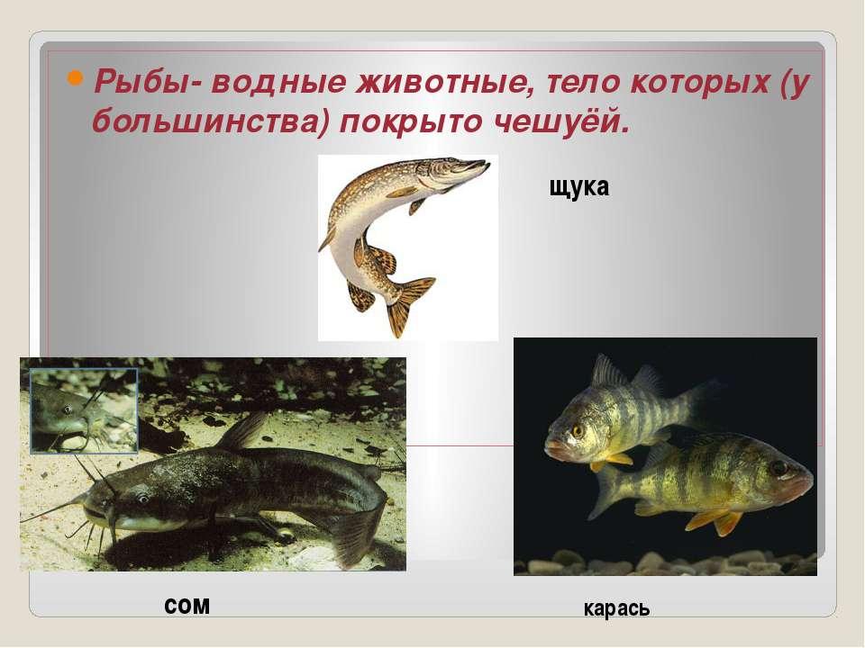Рыбы- водные животные, тело которых (у большинства) покрыто чешуёй. щука сом ...