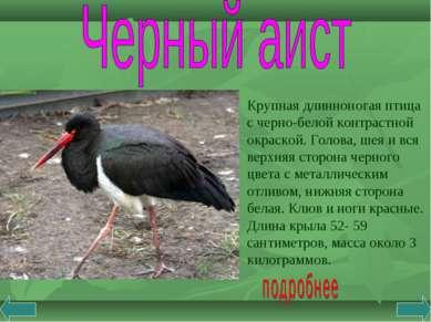 Крупная длинноногая птица с черно-белой контрастной окраской. Голова, шея и в...