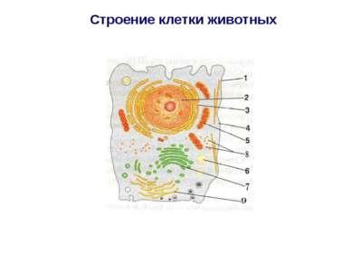 Строение клетки животных