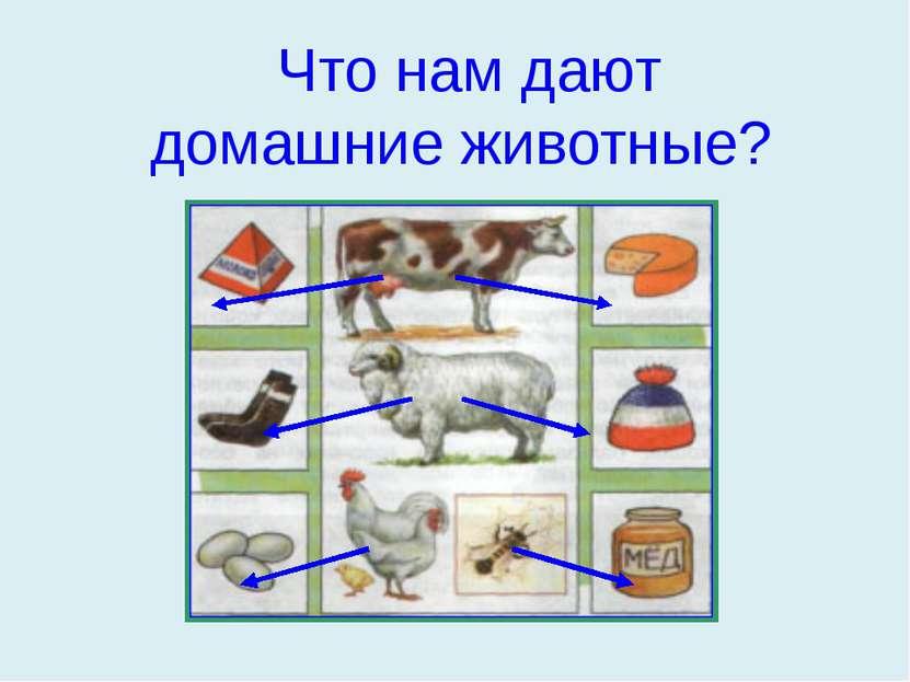 Что нам дают домашние животные?