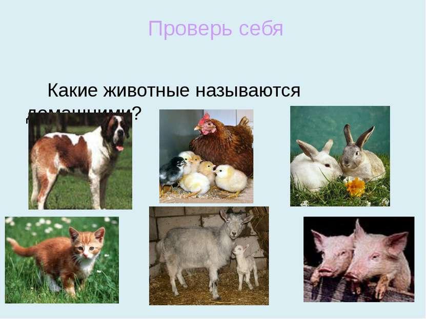 Какие животные называются домашними? Проверь себя