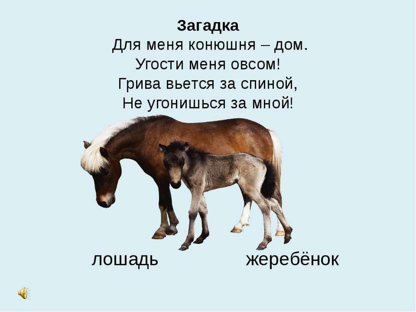 Загадка Для меня конюшня – дом. Угости меня овсом! Грива вьется за спиной, Не...