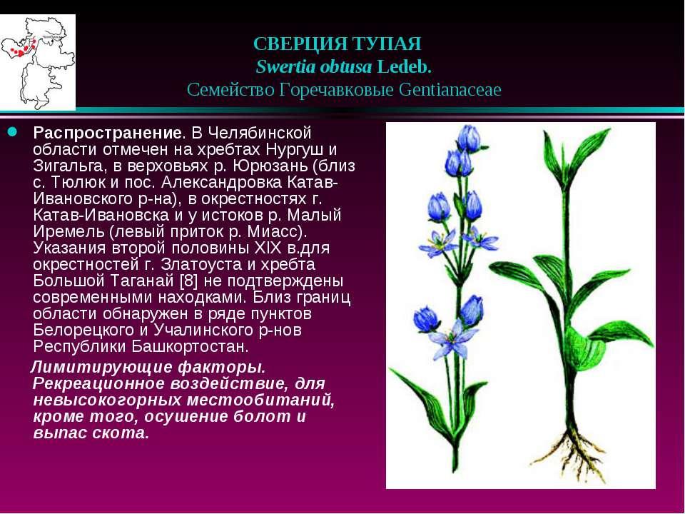 СВЕРЦИЯ ТУПАЯ Swertia obtusa Ledeb.  Семейство Горечавковые Gentianaceae...