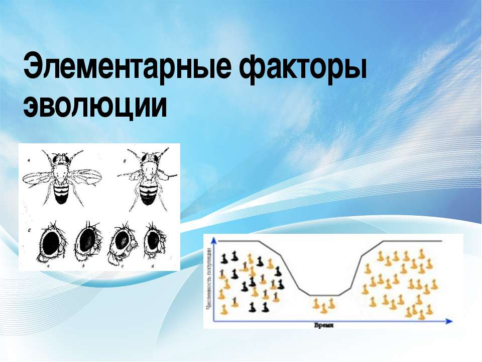 Элементарные факторы эволюции