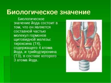 Биологическое значение Биологическое значение йода состоит в том, что он явля...