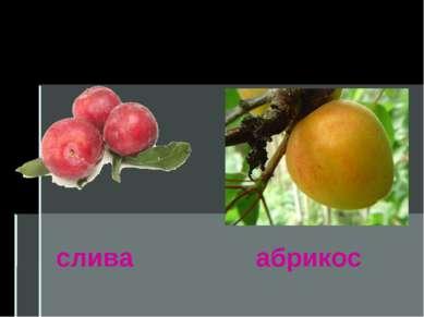 Костянка слива абрикос