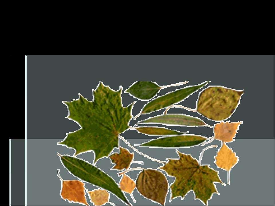 В зелёном листе происходят удивительные превращения. Из углекислого газа, воз...