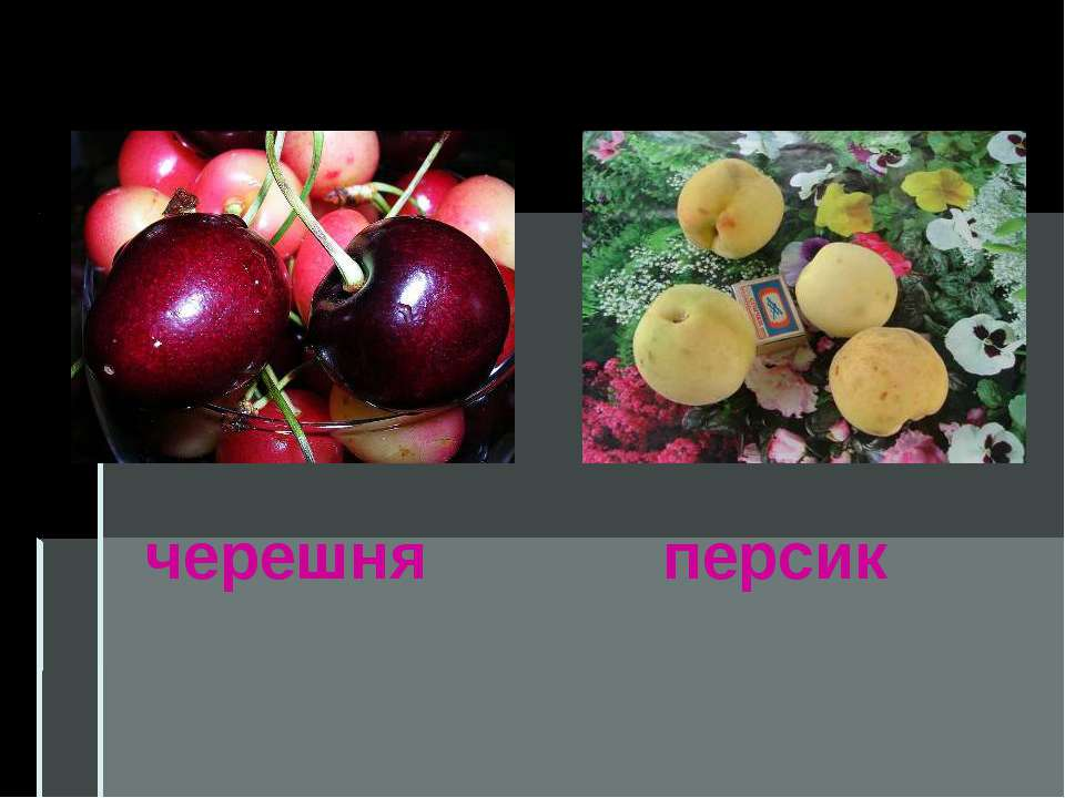 черешня персик