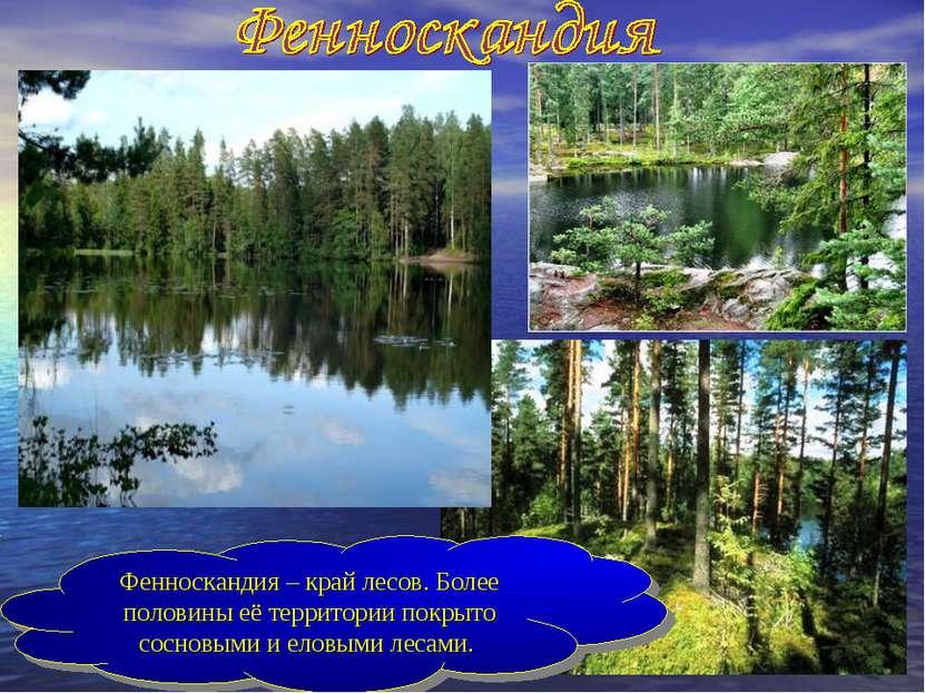 Фенноскандия – край лесов. Более половины её территории покрыто сосновыми и е...