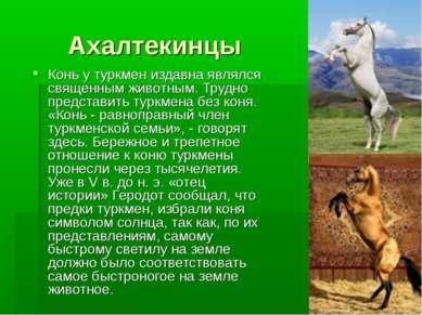 Ахалтекинцы Конь у туркмен издавна являлся священным животным. Трудно предста...