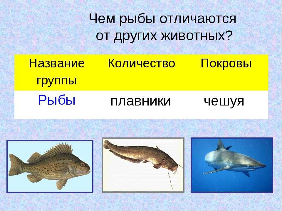 Чем рыбы отличаются от других животных? плавники чешуя Название группы Количе...
