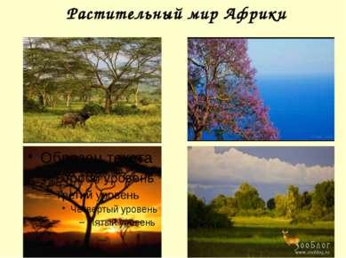 Растительный мир Африки