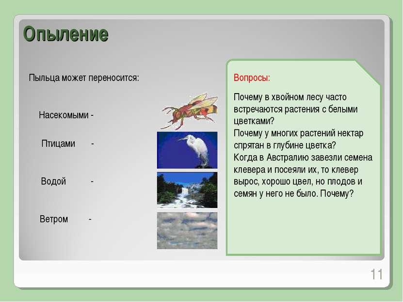 Пыльца может переносится: * Опыление Насекомыми - Птицами - Водой - Ветром - ...