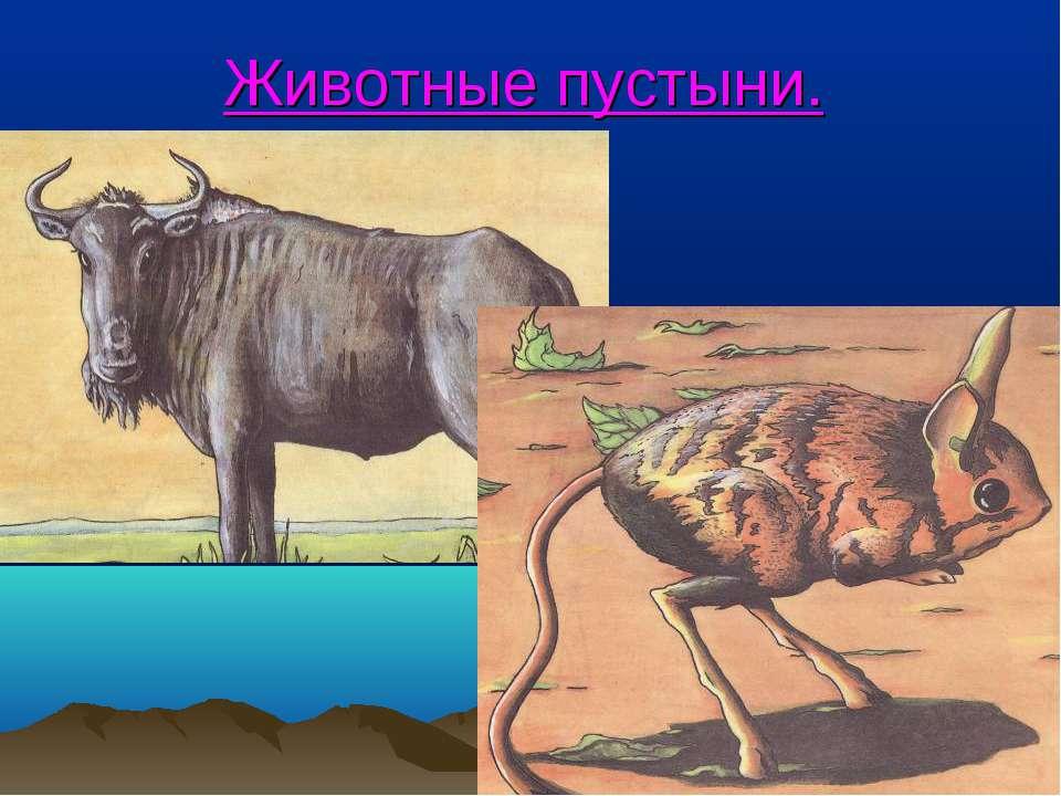 Животные пустыни.