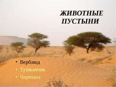 ПУСТЫНИ Верблюд Тушканчик Черепаха ЖИВОТНЫЕ