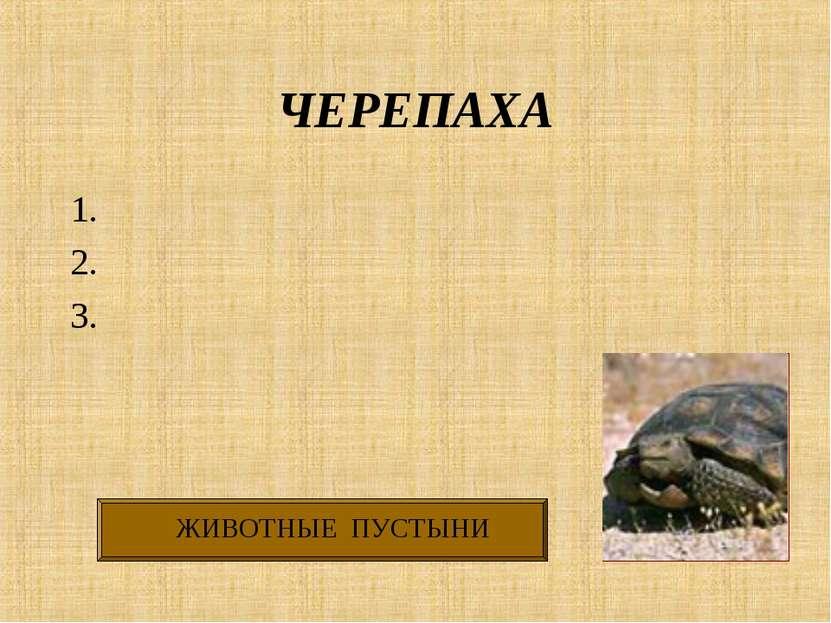 ЧЕРЕПАХА 1. 2. 3.