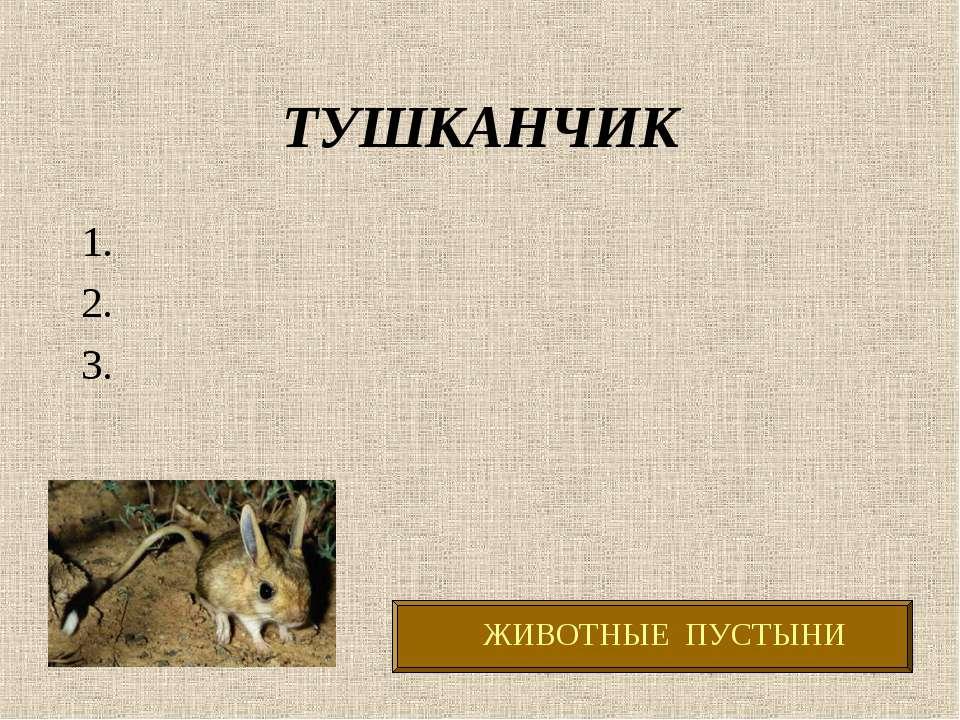 ТУШКАНЧИК 1. 2. 3.