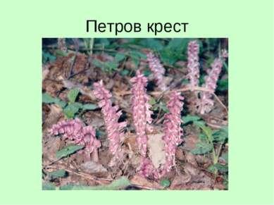 Петров крест