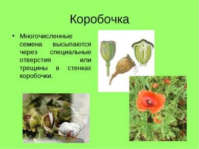 Коробочка Многочисленные семена высыпаются через специальные отверстия или тр...