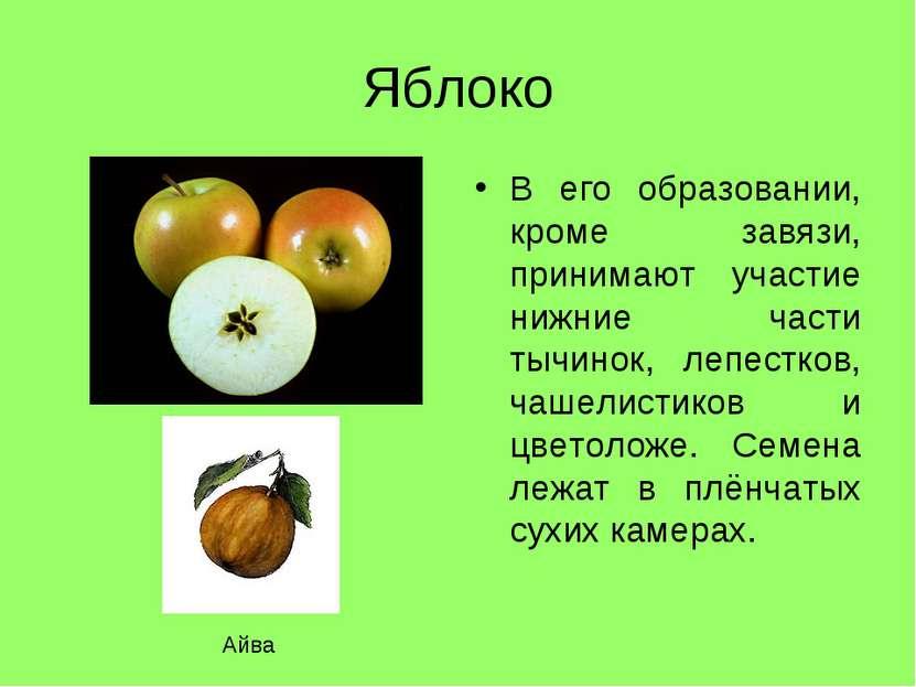 соответствии санитарным почему цветки арбуза не дает завязи Популярные