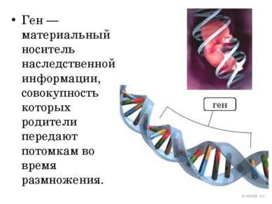 Ген — материальный носитель наследственной информации, совокупность которых р...