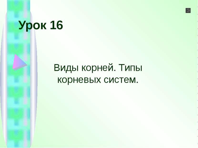 Урок 16 Виды корней. Типы корневых систем.