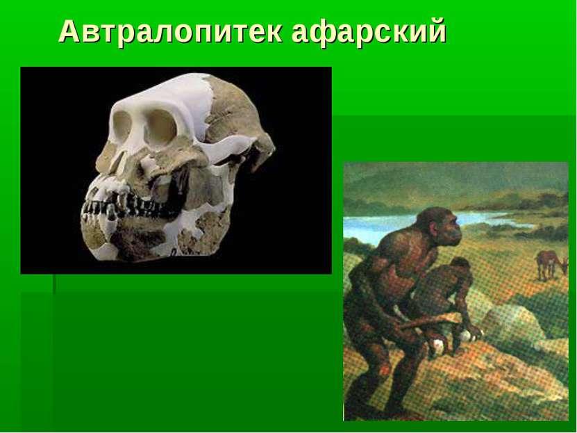 Автралопитек афарский