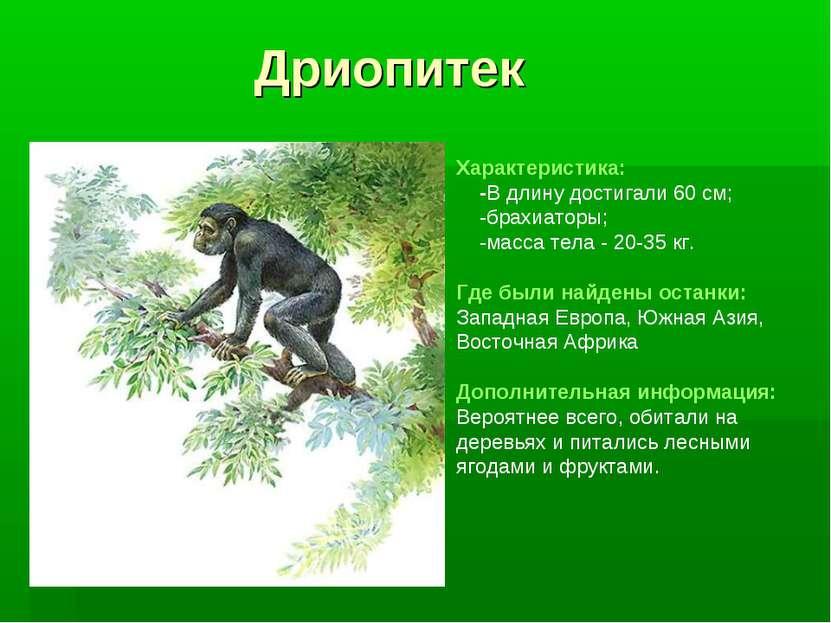 Дриопитек Характеристика: -В длину достигали 60 см; -брахиаторы; -масса тела ...
