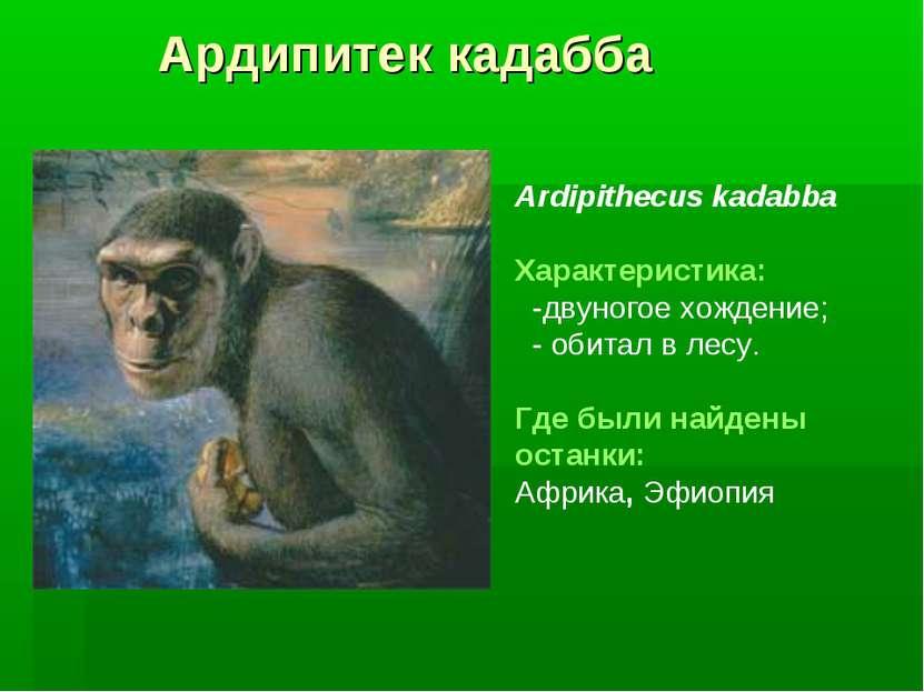 Ардипитек кадабба Ardipithecus kadabba Характеристика: -двуногое хождение; - ...
