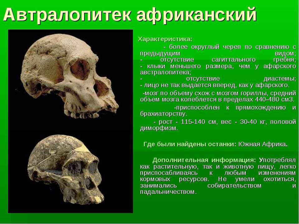 Автралопитек африканский Характеристика: - более округлый череп по сравнению ...