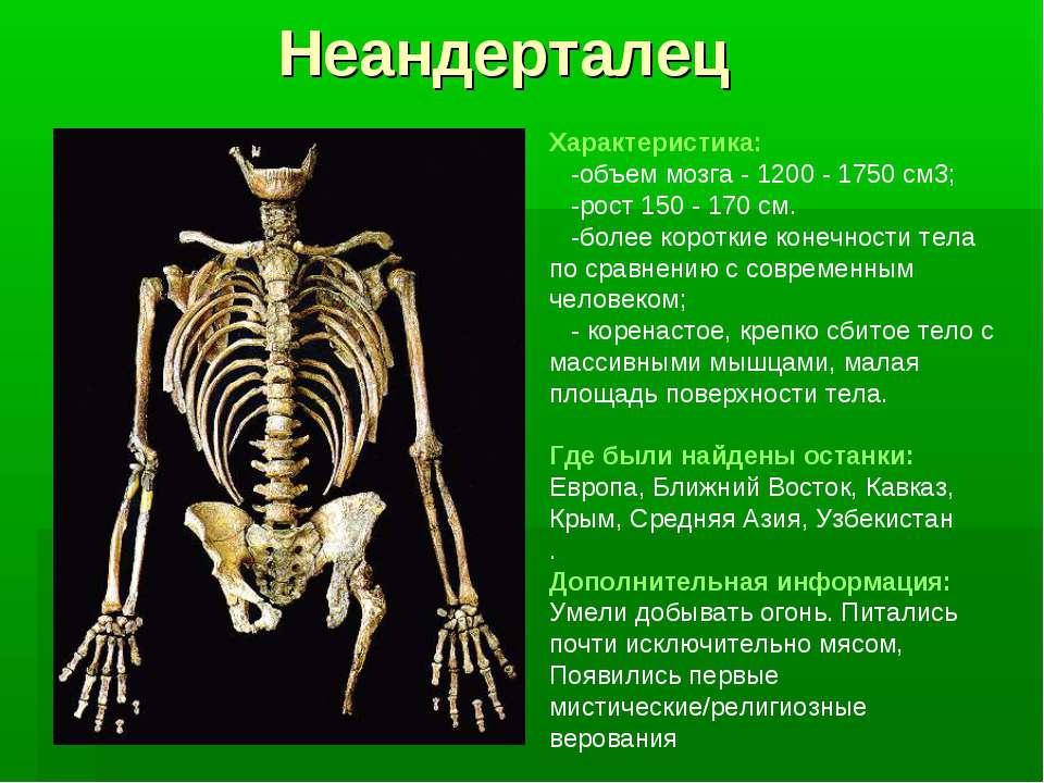 Неандерталец Характеристика: -объем мозга - 1200 - 1750 см3; -рост 150 - 170 ...