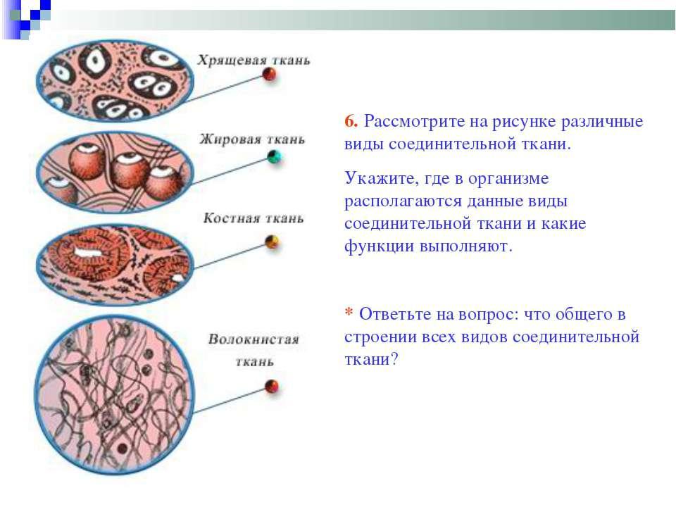 6. Рассмотрите на рисунке различные виды соединительной ткани. Укажите, где в...
