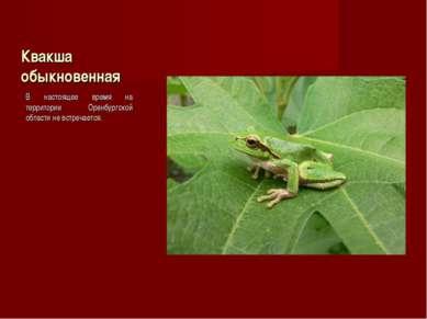 Квакша обыкновенная В настоящее время на территории Оренбургской области не в...
