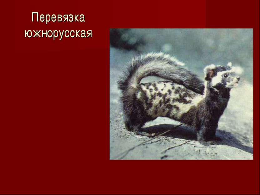 Перевязка южнорусская