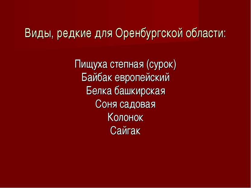 Виды, редкие для Оренбургской области: Пищуха степная (сурок) Байбак европейс...