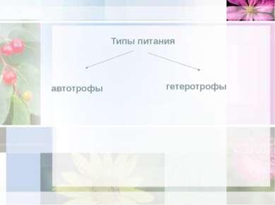 Типы питания автотрофы гетеротрофы