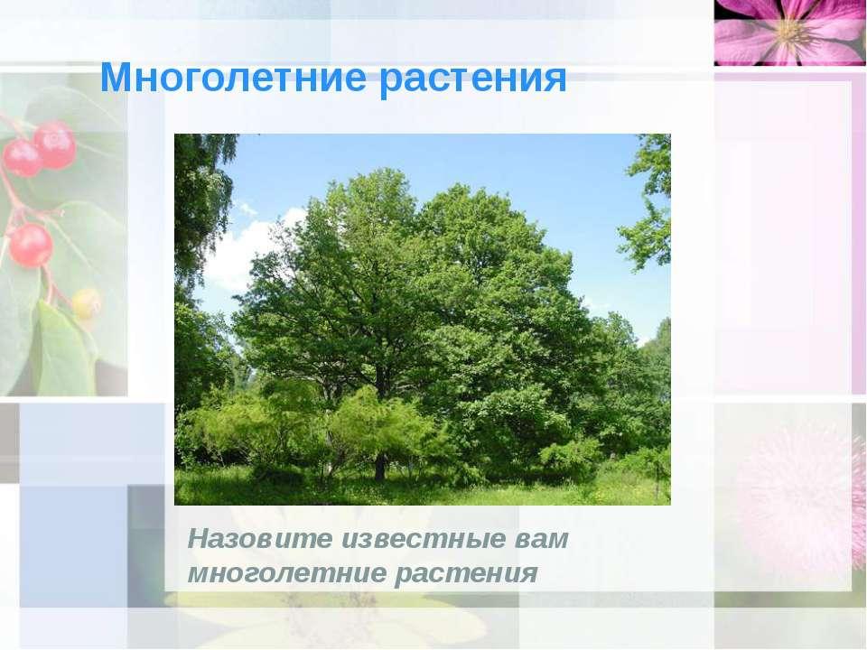 Многолетние растения Назовите известные вам многолетние растения