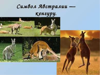 Символ Австралии — кенгуру.
