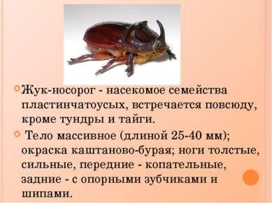 Жук-носорог - насекомое семейства пластинчатоусых, встречается повсюду, кроме...
