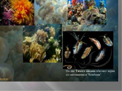 "На дне Тихого океана обитают черви со светящимися ""бомбами"""