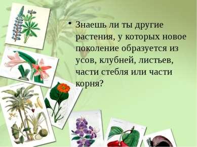 Знаешь ли ты другие растения, у которых новое поколение образуется из усов, к...