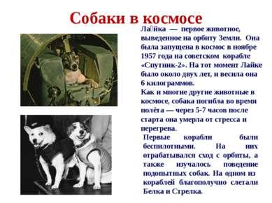 Собаки в космосе Первые корабли были беспилотными. На них отрабатывался сход ...