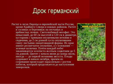 Дрок германский Растет в лесах Европы и европейской части России, кроме Крайн...