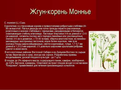 Жгун-корень Моннье C. monnieri (L.) Cuss. Однолетник со стержневым корнем и п...