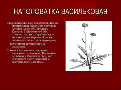 НАГОЛОВАТКА ВАСИЛЬКОВАЯ Евросибирский вид, встречающийся от Центральной Европ...